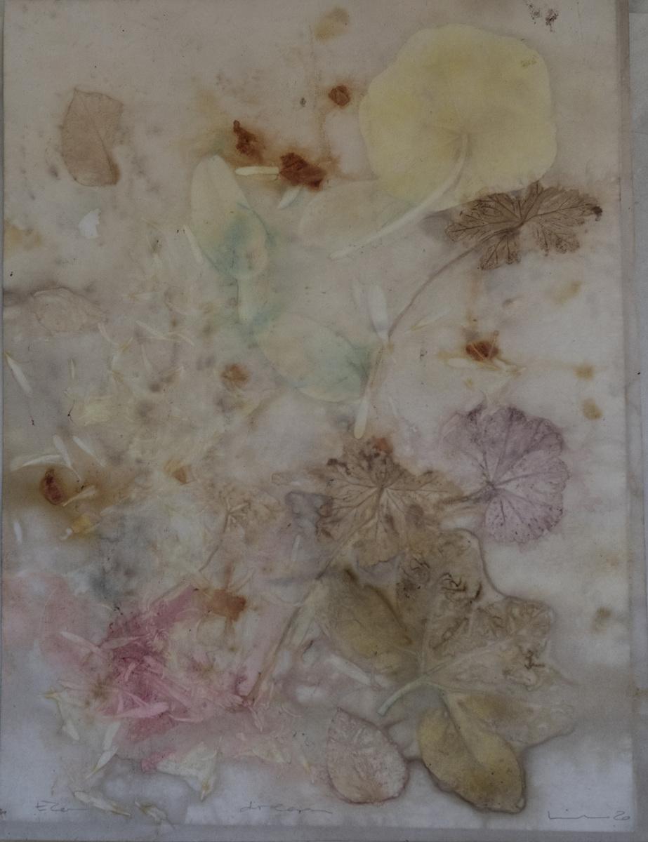 linda cartridge photographer and artist - Botanical contact print 30x40 watercolour paper