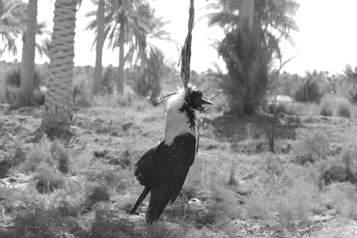 Tariq AlHadad - Scarecrow, IRAQ