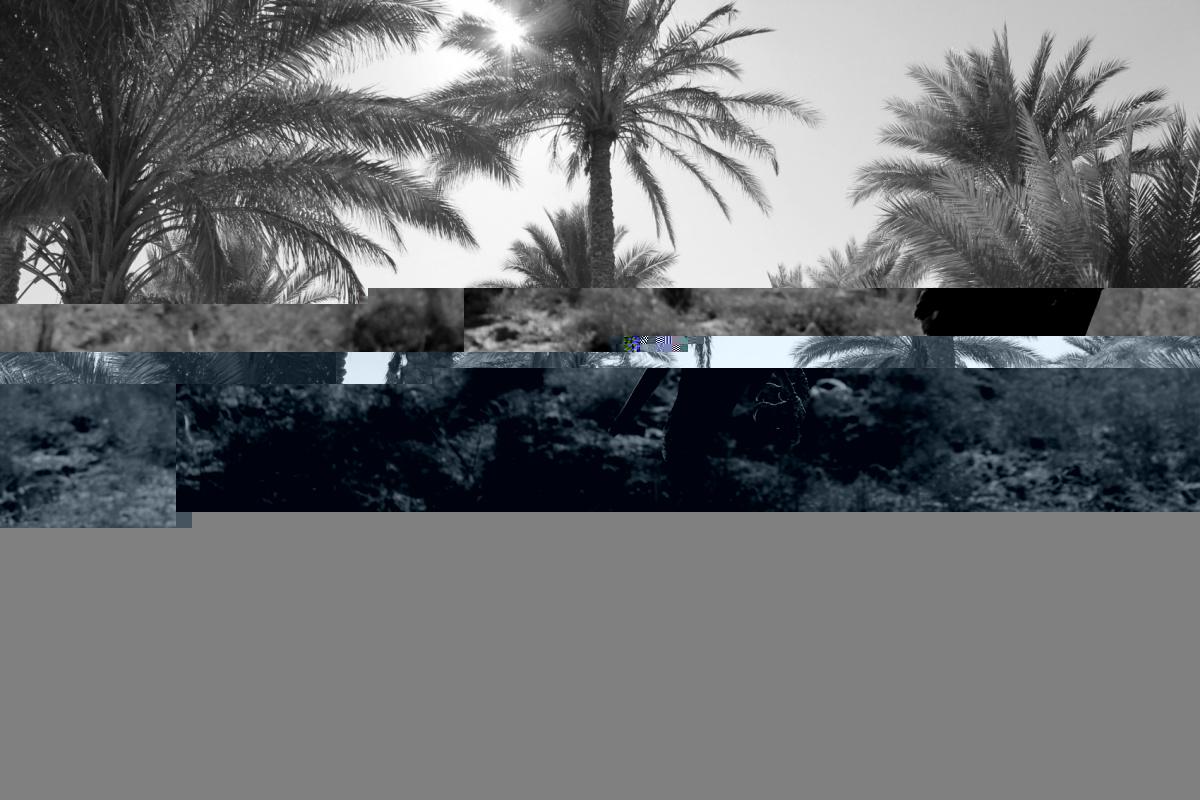 Tariq AlHadad -