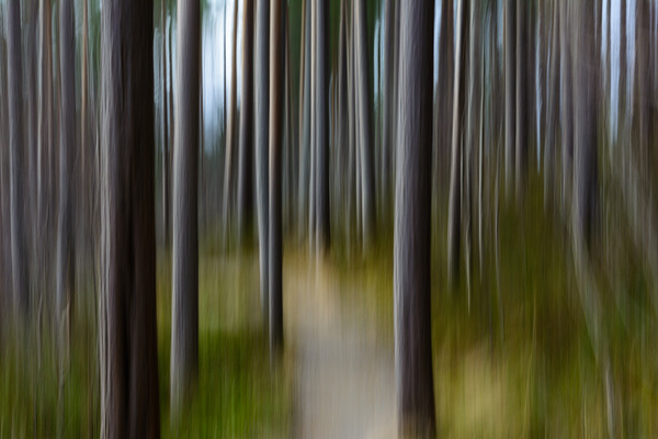 Erik Bjørnøy Olsen - Abstract Forest