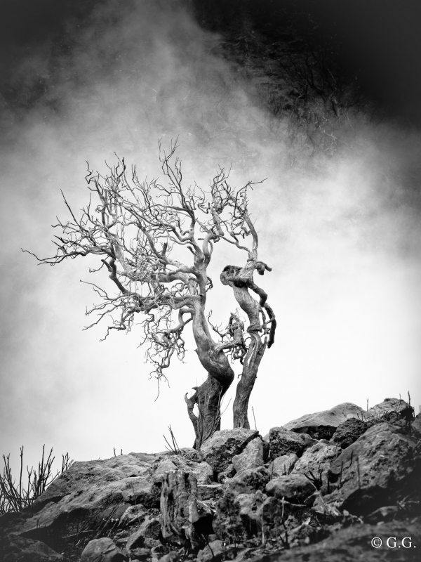 Gunnar Grimmer Photography - OT
