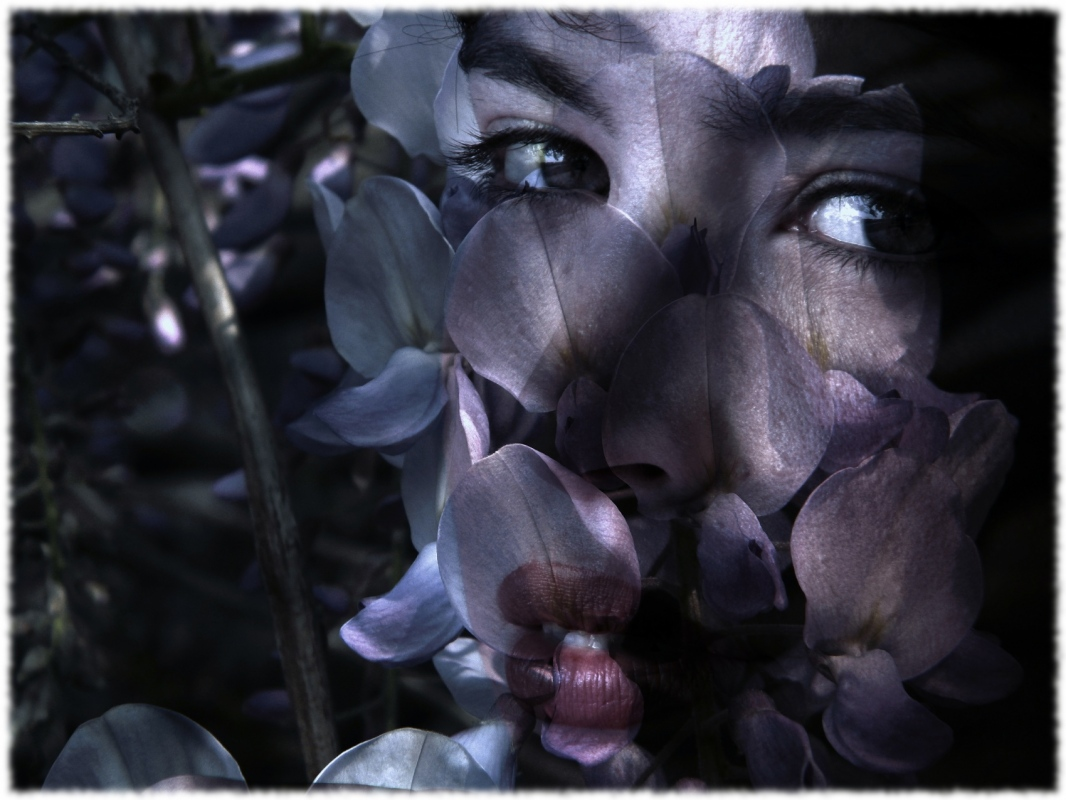 Eleonora Gadducci Photographer - Flowers Rhapsody