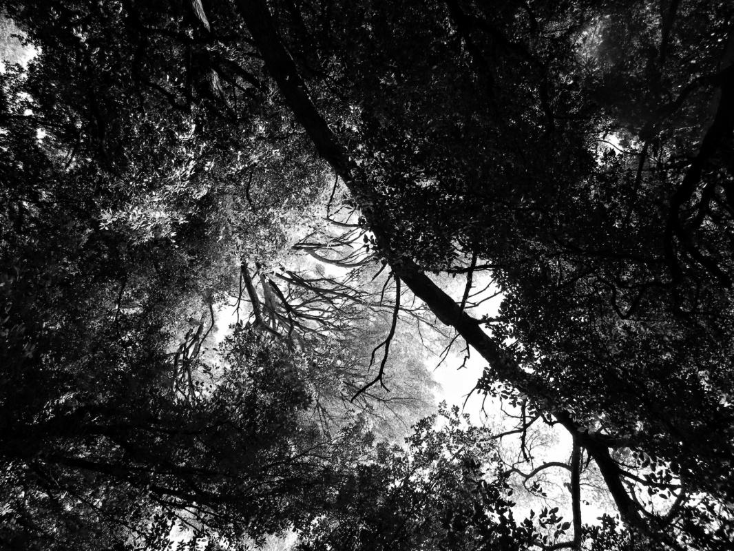 Eleonora Gadducci Photographer - The Streets of Heaven
