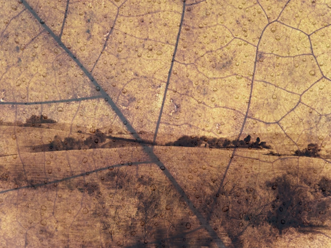 Eleonora Gadducci Photographer - Antique Landscape