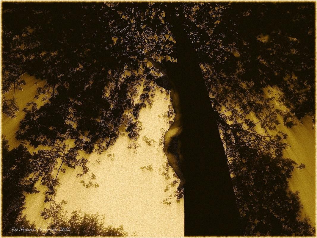 Eleonora Gadducci Photographer - Resurrection