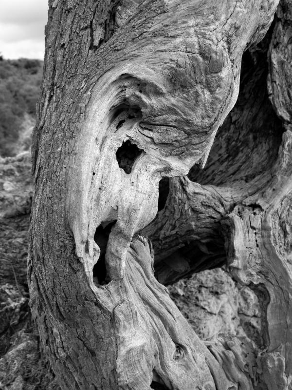 Eleonora Gadducci Photographer - The Spirit of the Wind