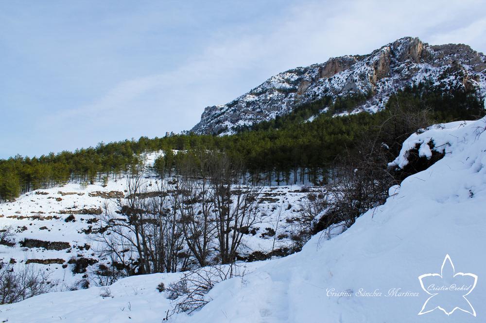 Cristina Sánchez Martínez - Snowy mountains