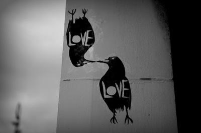 Steven Parker Photography - York based photographer - love birds