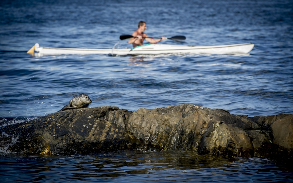 John T. Pedersen Photography - Seal in the afternoon