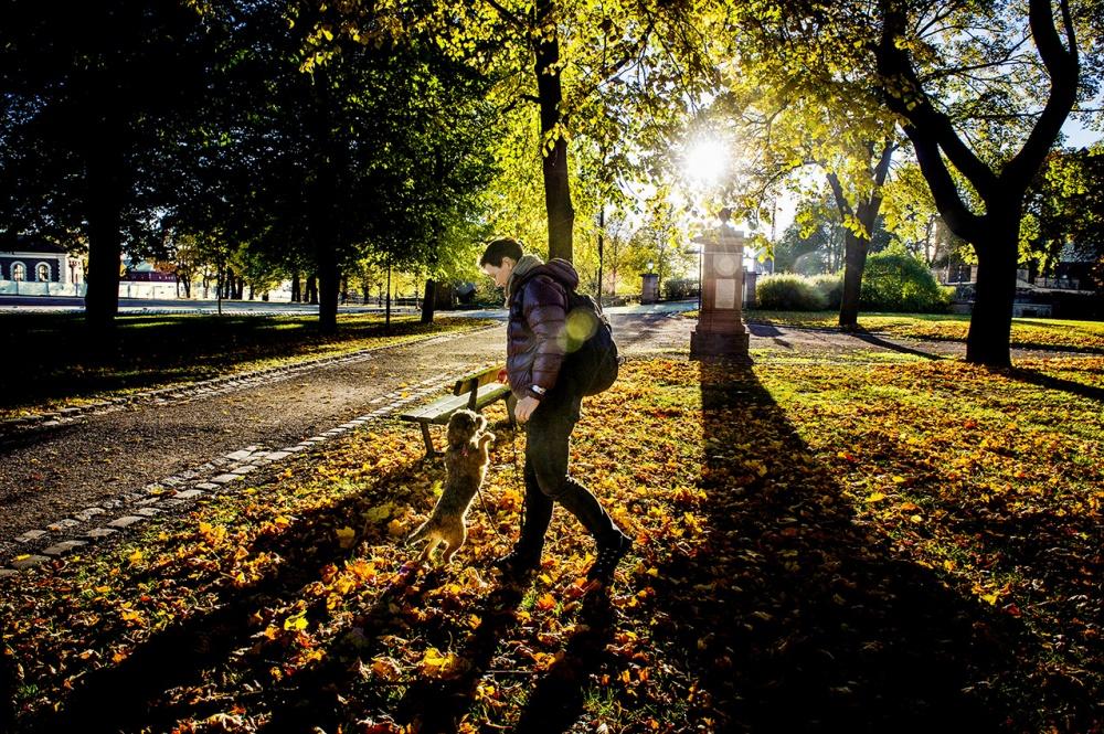 John T. Pedersen Photography - Dog in the park