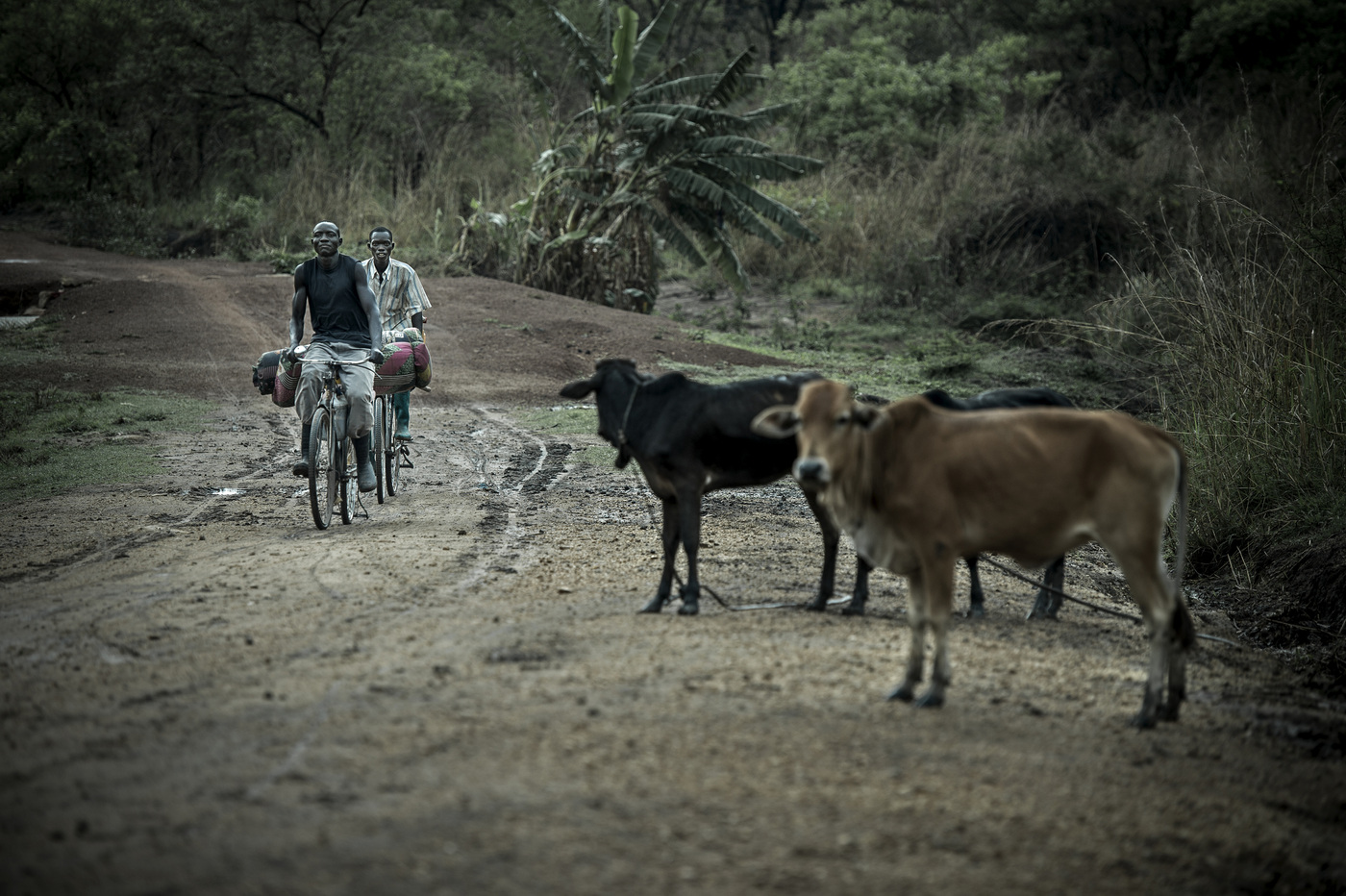 John T. Pedersen Photography - The refugees are crossing the border from small paths and roads out in the bush.