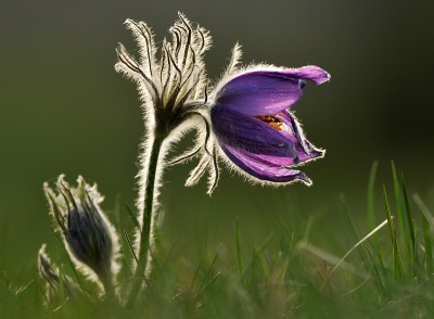 Frode Wendelbo Nature and Wildlife photographer - Backsippa #1