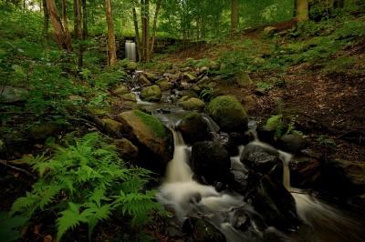 Frode Wendelbo Nature and Wildlife photographer - Lackarebäck #1