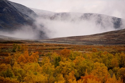 Frode Wendelbo Nature and Wildlife photographer - Dovre NP #1