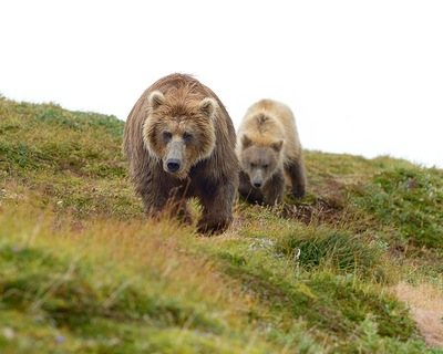 Frode Wendelbo Nature and Wildlife photographer - Grizzly #2
