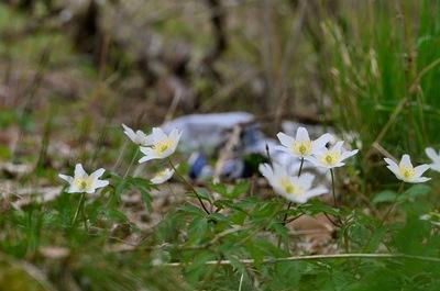 Frode Wendelbo Nature and Wildlife photographer - Vår/Spring