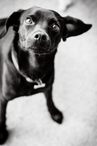 Gavina Reitnauer Photography -