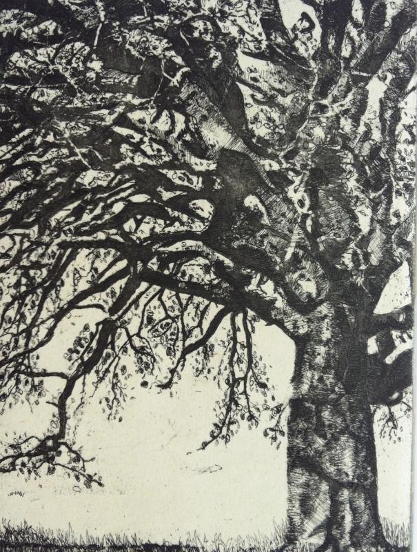 DIANA DAYMOND ART AND DESIGN - BIG LONELY OAK
