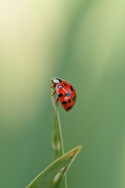 Matt Lindzon Photography - Taken in Muskoka, Ontario With a Canon T2i 2008 Lady Bug