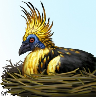 Geoffrey Brittingham all-nite illustration - Hoatzin