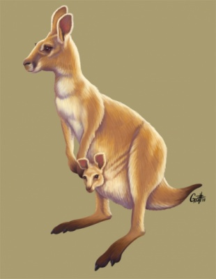 Geoffrey Brittingham all-nite illustration - Kangaroo & Joey