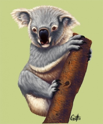 Geoffrey Brittingham all-nite illustration - Koala