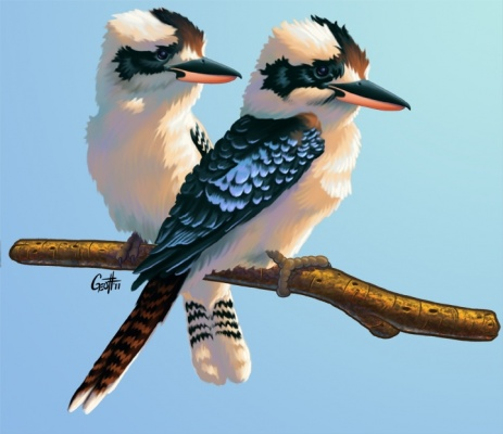 Geoffrey Brittingham all-nite illustration - Kookaburrars