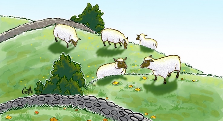 Geoffrey Brittingham all-nite illustration - Sheep Pasture