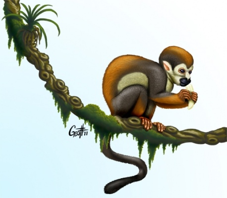 Geoffrey Brittingham all-nite illustration - Squirrel Monkey