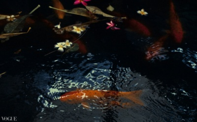Dilokrit Barose Photos - My dads Koi fish pond.