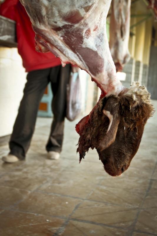 manuel zamora - Zoco de Azrou. Marruecos