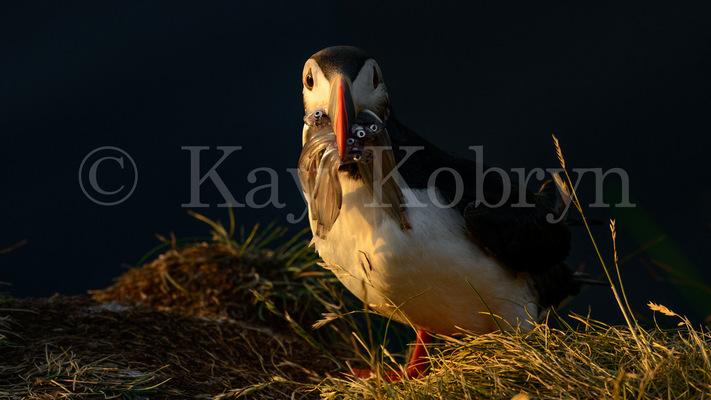 kay kobryn photography - 5155×2900