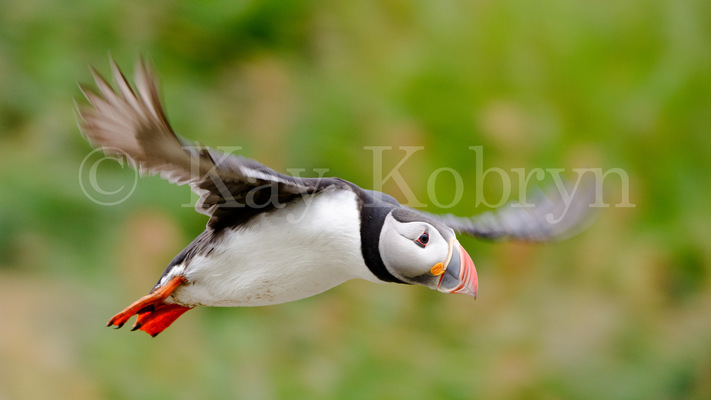 kay kobryn photography - 4962×2791