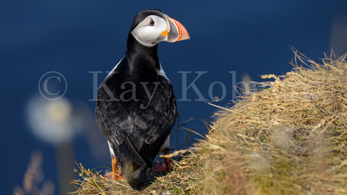 kay kobryn photography - 6353×3574