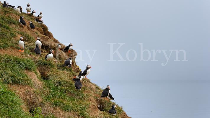 kay kobryn photography - 7298×4105