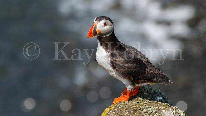 kay kobryn photography - 3800×2137