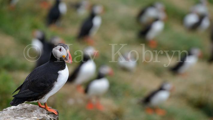 kay kobryn photography - 7042×3961