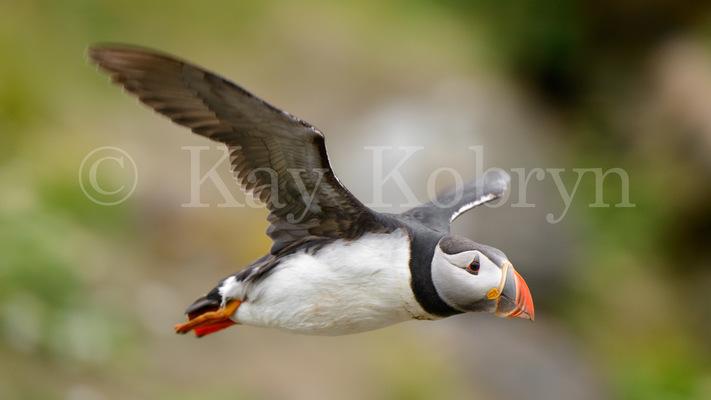 kay kobryn photography - 6254×3518