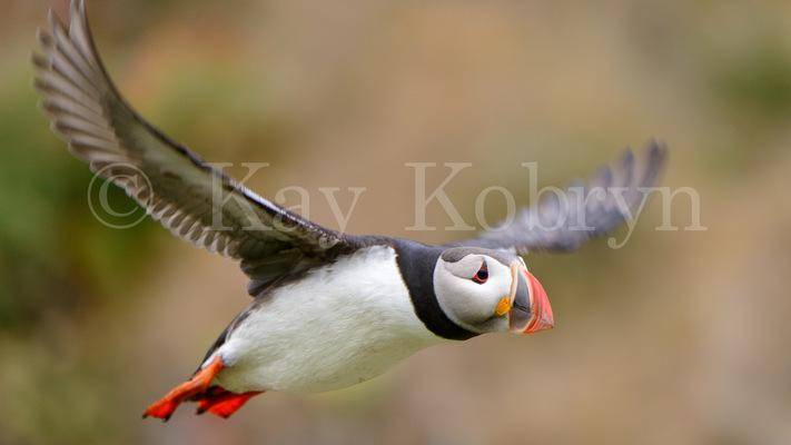 kay kobryn photography - 5780×3251