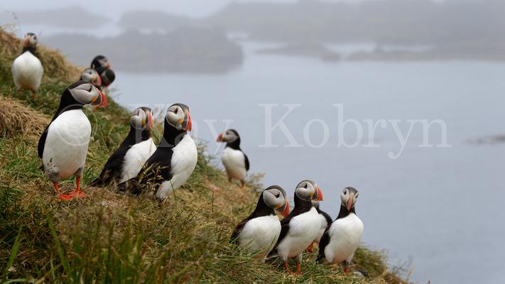 kay kobryn photography - 6856×3857