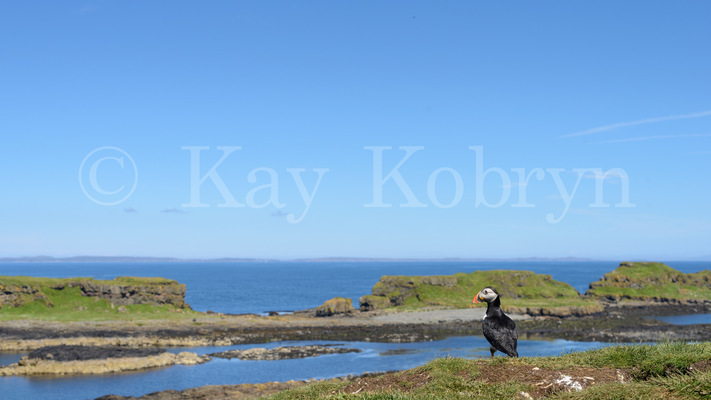 kay kobryn photography -