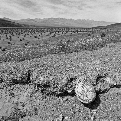 Spindler Photography - Death Valley Zigzag Layers