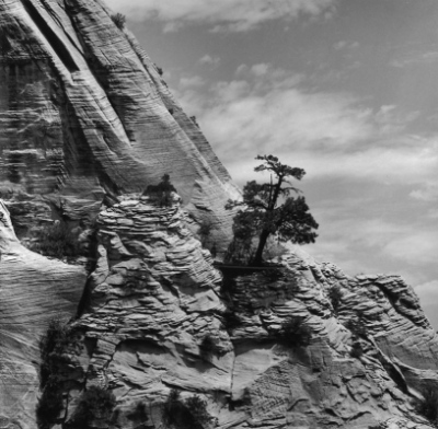Spindler Photography - Zion Wall with Tree