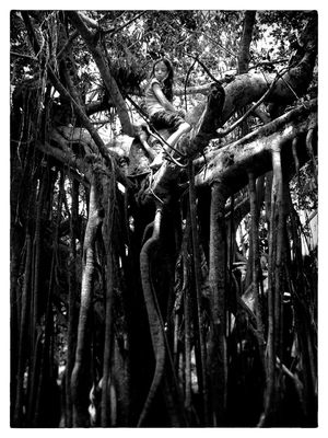 Andrew Bannerman-Bayles - Girl in a Banyan Tree Australia
