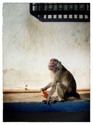 Andrew Bannerman-Bayles - Monkey Mountain Hua Hin, Thailand