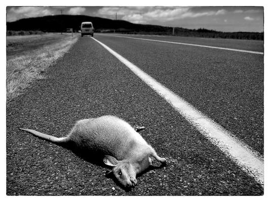 Andrew Bannerman-Bayles - Roadkill Australia