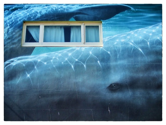 Andrew Bannerman-Bayles - Wall mural Kaikoura, New Zealand