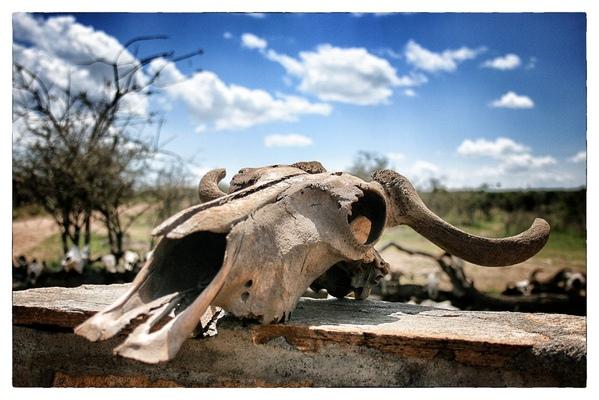 Andrew Bannerman-Bayles - Masai Mara Kenya, Africa