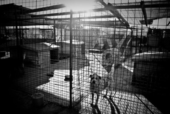a l e s s a n d r o f a g i o l i - Municipal kennel. Assisi, Italy