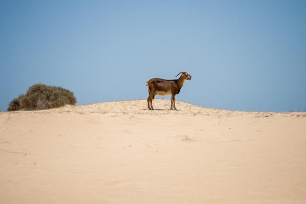 a l e s s a n d r o f a g i o l i - Corralejo Natural Park, Fuerteventura, Canary Islands
